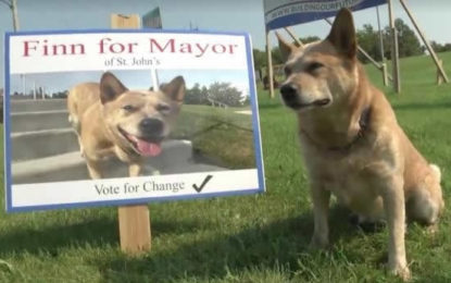 Dog Runs for Mayor of Canadian Town
