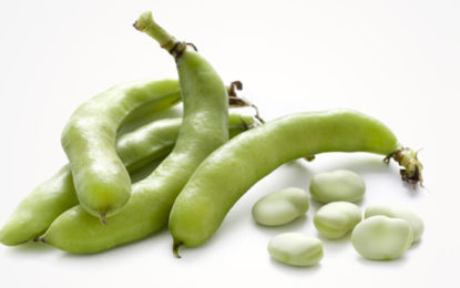 10 Amazing Health Benefits And Nutritional Value Of Fava Beans