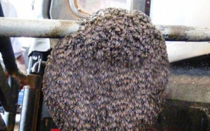 Bee Hive Nest in a Moving Van
