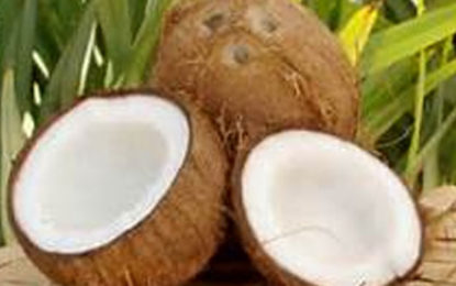 Price of Coconut Come Down Within 2 Weeks