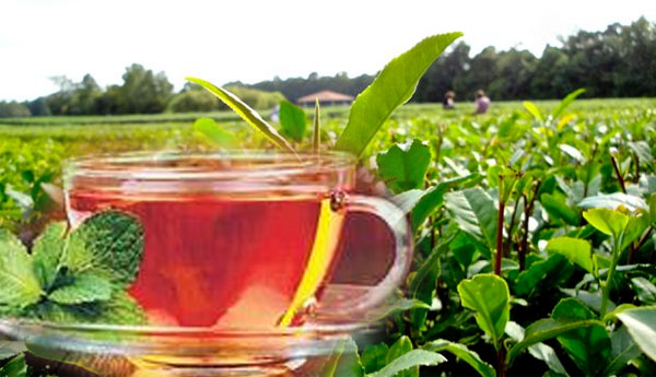 Tea Export to Russia Recommences From Tomorrow