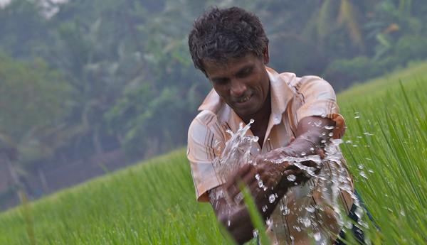 Fertilizer Subsidy Regularized
