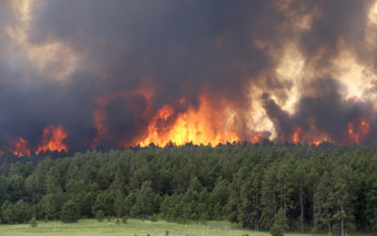 Forest Fire Destroyed 400 Acres