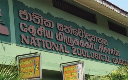 Dehiwala Zoo to be Closed  For 3 Nights