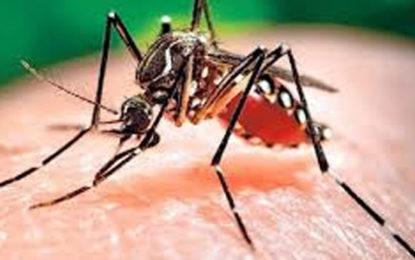 Dengue Cases Decline……