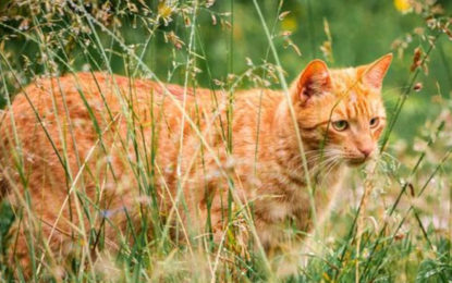 New Zealand village's plans to ban cats
