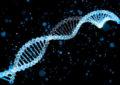 Genetics play vital role in neurodevelopment disorders