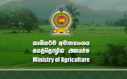Compensation for damaged paddy lands in Mullaitivu and Killinochchi