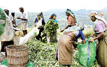 Plantation workers' wages to increase through budgetary allocation