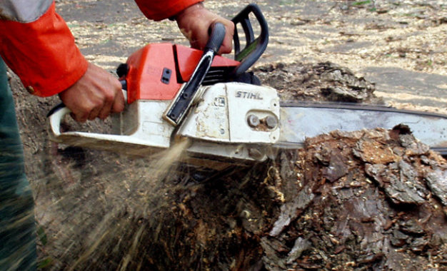 All chainsaw machines must register before Feb. 28