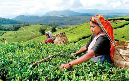 Govt. adds Rs 50 allowance to estate workers' wage