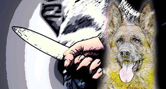 Man arrested for severing the tongue and killing of pet dog