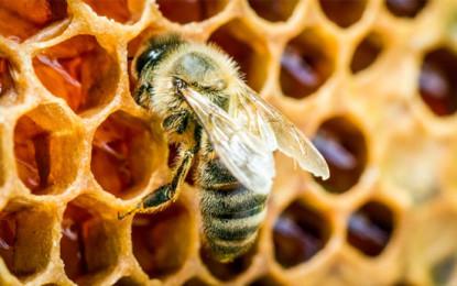 Bee Superfoods