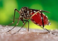 Dengue outbreaks increase with climate change