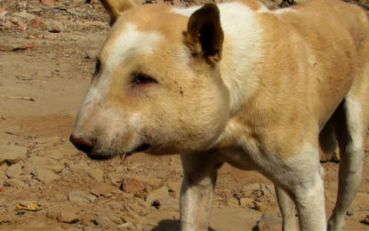 A Youth Spent Rs. 80,000 to Save the Life of a Street Dog