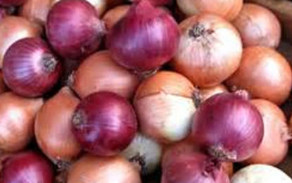 100% Tax on Imported Big Onions