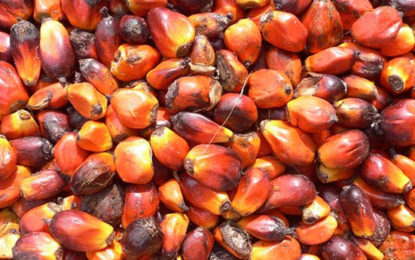 Planters Association Calls For Greater Support In Oil Palms