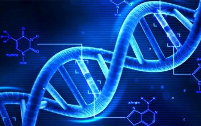 "DNA Test on ""Thalaputuwa"" Elephant Killed In Galgamuwa"