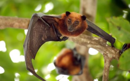 Deadly Nipah Virus Claims Victims in India