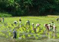 Sri Lanka's first agriculture model village in Kahattewela – Haputale