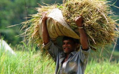 Free Organic Fertilizers for Farmers soon