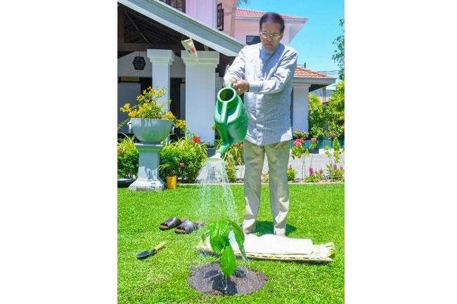 President performs tree planting custom for Sinhala & Tamil News Year