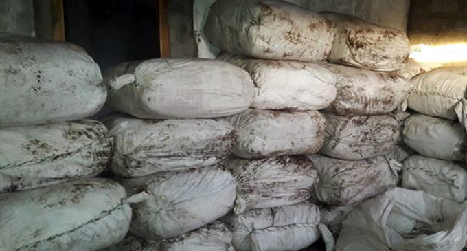980kg of beedi leaves found at Erambugodella