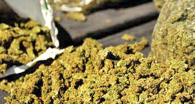 Suspect arrested while transporting 203kg of Kerala Ganja