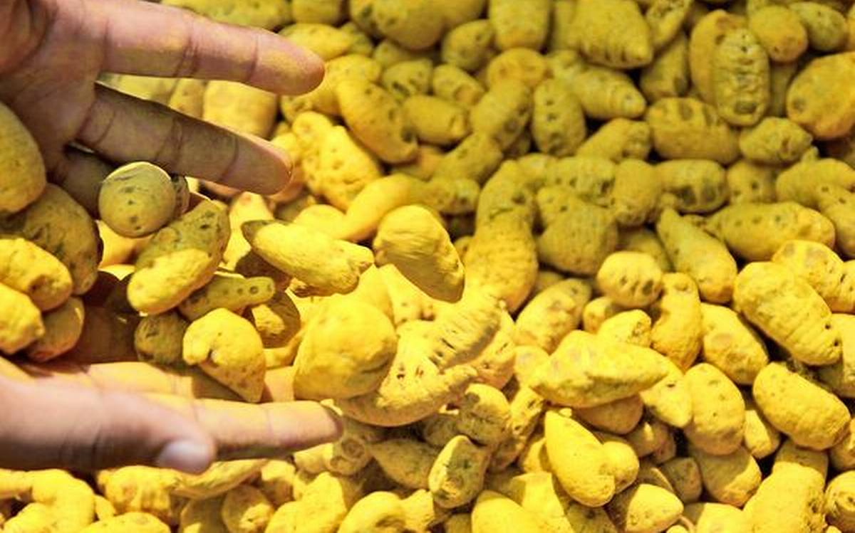 Three arrested in Marawila with 1,000 kg of turmeric