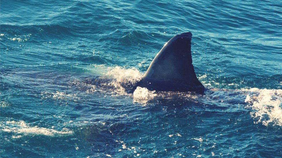New Zealand woman dies in rare suspected shark attack