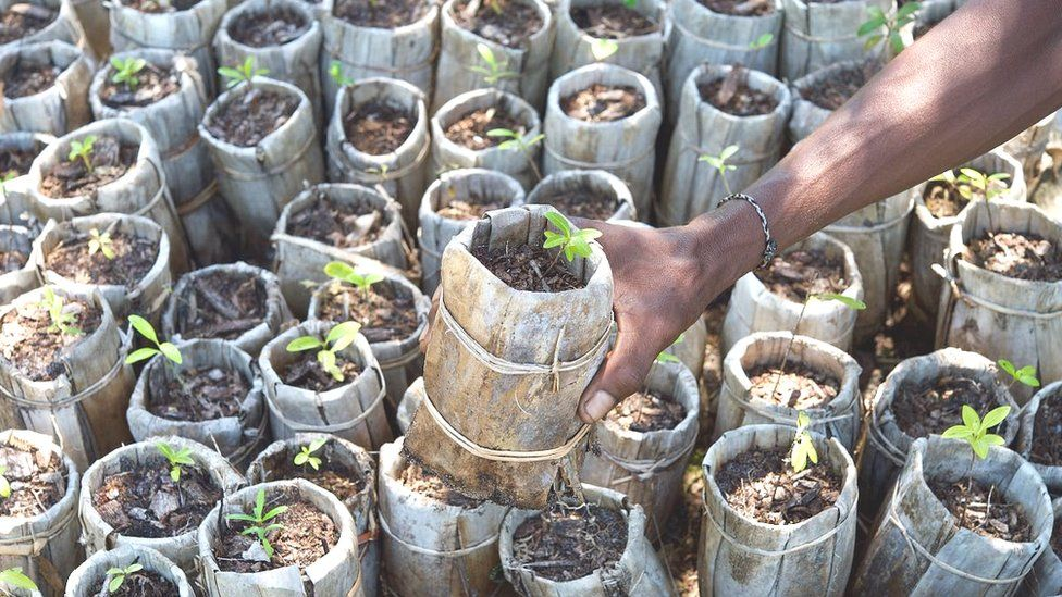Scientists address myths over tree planting