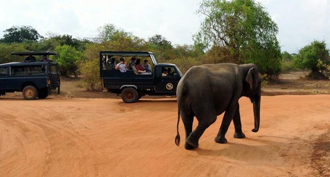 Safari drivers in quarantine quandary after Yala tour